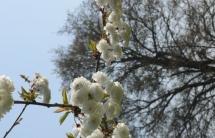 Le printemps à Marigny - Avril 2014